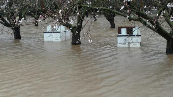 bee-hives-in-flood-waters