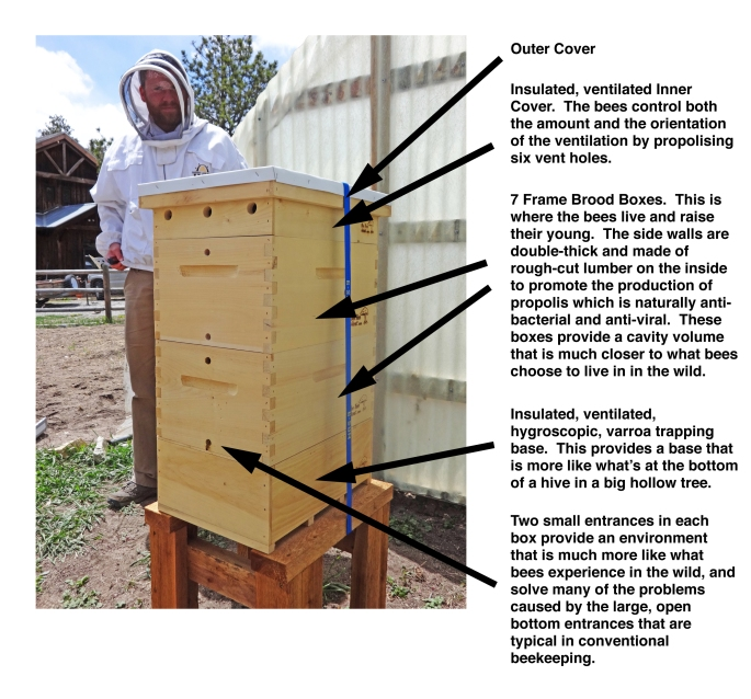 Brief Bee Tree Hives Explanation